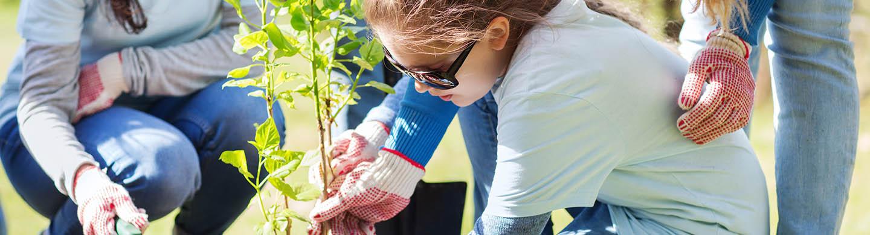 Not for profit volunteers planting saplings